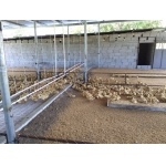 plastic leakage dung floor for chicken